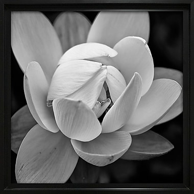 Ebern Designs 'Lotus I' Square Framed Photographic Print