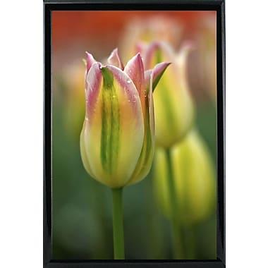 East Urban Home 'Tulip No 4' Photographic Print; Black Metal Framed Paper