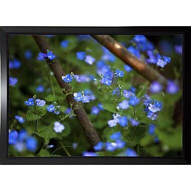 Ebern Designs 'Blue Little Flowers' Photographic Print; Black Plastic Framed Paper
