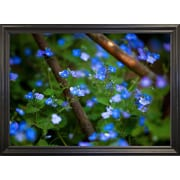 Ebern Designs 'Blue Little Flowers' Photographic Print; Black Wood Grande Framed Paper