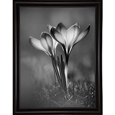 Ebern Designs 'Crocus Black and White' Photographic Print; Bistro Expresso Framed Paper