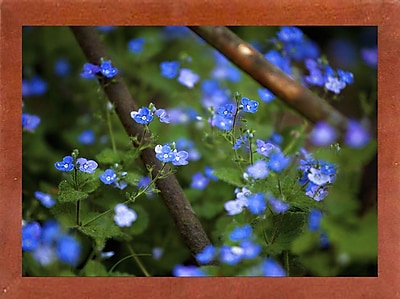 Ebern Designs 'Blue Little Flowers' Photographic Print; Canadian Walnut Wood Medium Framed Paper