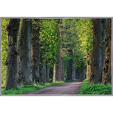 Charlton Home 'Light Green Forest Road' Photographic Print; White Metal Framed Paper