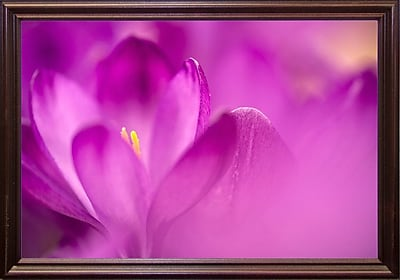 Ebern Designs 'Purple Flower Study' Photographic Print; Cherry Wood Grande Framed Paper