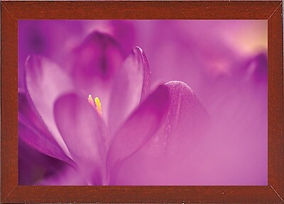 Ebern Designs 'Purple Flower Study' Photographic Print; Red Mahogany Wood Medium Framed Paper