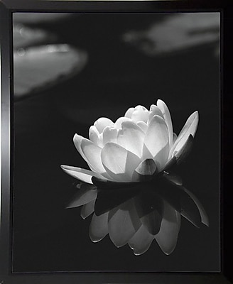 Ebern Designs 'Water Lily Black and White' Photographic Print; Black Plastic Framed Paper