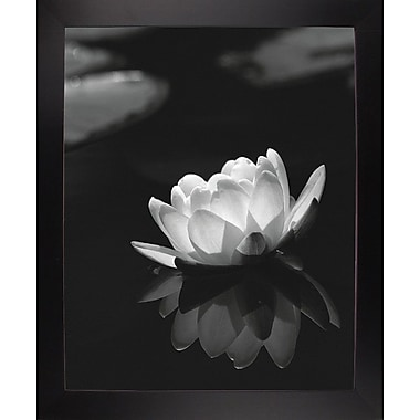 Ebern Designs 'Water Lily Black and White' Photographic Print; Black Wood Large Framed Paper