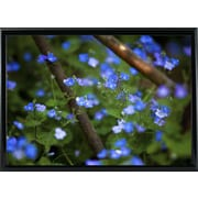 Ebern Designs 'Blue Little Flowers' Photographic Print; Black Metal Framed Paper