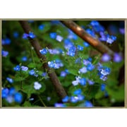 Ebern Designs 'Blue Little Flowers' Photographic Print; Gold Metal Framed Paper