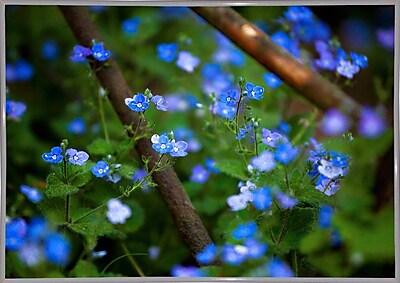 Ebern Designs 'Blue Little Flowers' Photographic Print; White Metal Framed Paper