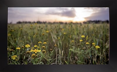 Ebern Designs 'Flowers in the Sunset' Photographic Print; Black Wood Large Framed Paper