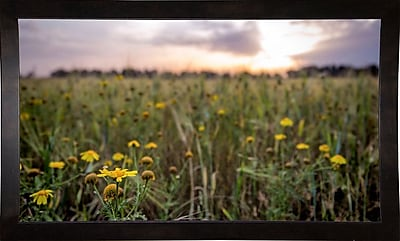 Ebern Designs 'Flowers in the Sunset' Photographic Print; Cafe Espresso Wood Framed Paper