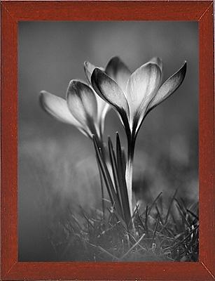 Ebern Designs 'Crocus Black and White' Photographic Print; Red Mahogany Wood Medium Framed Paper