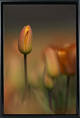 East Urban Home 'Tulip No 5' Graphic Art Print; Rolled Canvas