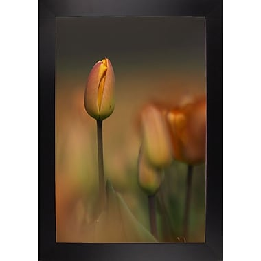 East Urban Home 'Tulip No 5' Graphic Art Print; Black Wood Large Framed Paper