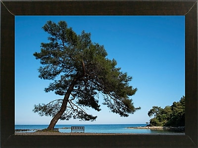 East Urban Home 'Tree at the Sea' Photographic Print; Brazilian Walnut Wood Medium Framed Paper