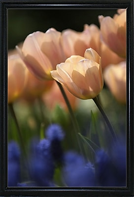 East Urban Home 'Tulip No 1' Photographic Print; Black Metal Flat Framed Paper