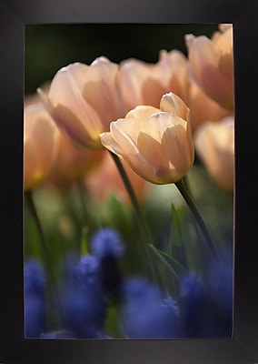 East Urban Home 'Tulip No 1' Photographic Print; Black Wood Large Framed Paper
