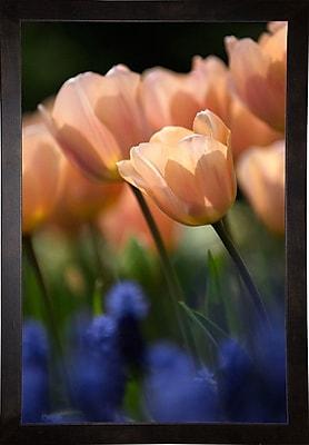 East Urban Home 'Tulip No 1' Photographic Print; Cafe Espresso Wood Framed Paper