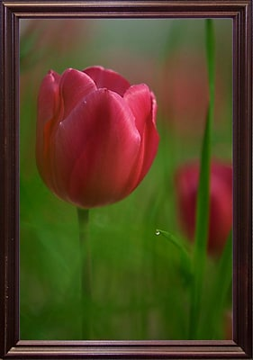 East Urban Home 'Tulip No 2' Graphic Art Print; Cherry Wood Grande Framed Paper