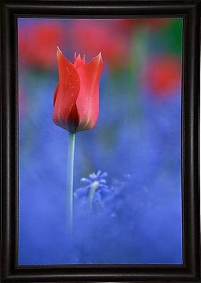 East Urban Home 'Tulip No 3' Graphic Art Print; Bistro Expresso Framed Paper