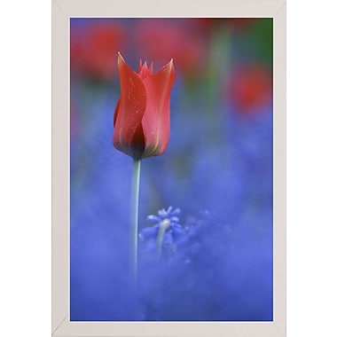 East Urban Home 'Tulip No 3' Graphic Art Print; White Wood Medium Framed Paper