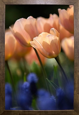 East Urban Home 'Tulip No 1' Photographic Print; Cafe Mocha Framed Paper
