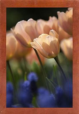 East Urban Home 'Tulip No 1' Photographic Print; Canadian Walnut Wood Medium Framed Paper