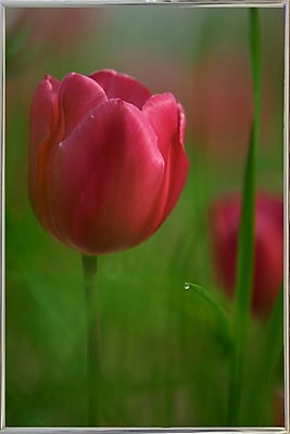 East Urban Home 'Tulip No 2' Graphic Art Print; Silver Metal Framed Paper