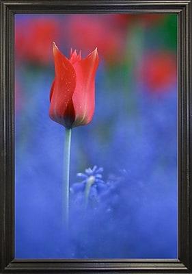 East Urban Home 'Tulip No 3' Graphic Art Print; Black Wood Grande Framed Paper