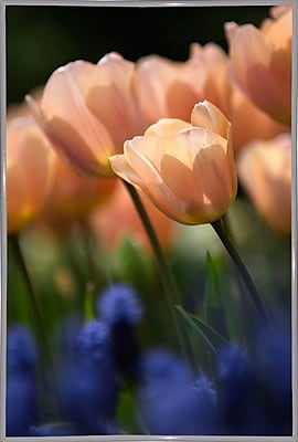 East Urban Home 'Tulip No 1' Photographic Print; White Metal Framed Paper