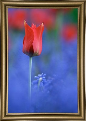 East Urban Home 'Tulip No 3' Graphic Art Print; Bistro Gold Framed Paper