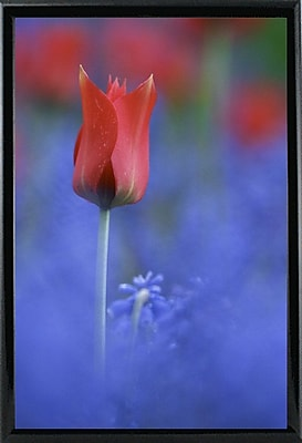 East Urban Home 'Tulip No 3' Graphic Art Print; Black Metal Framed Paper