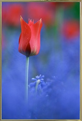 East Urban Home 'Tulip No 3' Graphic Art Print; Gold Metal Framed Paper