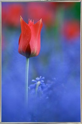 East Urban Home 'Tulip No 3' Graphic Art Print; Silver Metal Framed Paper