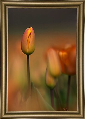 East Urban Home 'Tulip No 5' Graphic Art Print; Bistro Gold Framed Paper