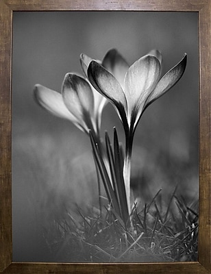 Ebern Designs 'Crocus Black and White' Photographic Print; Cafe Mocha Framed Paper
