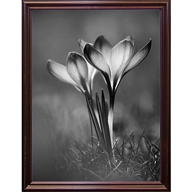 Ebern Designs 'Crocus Black and White' Photographic Print; Cherry Wood Grande Framed Paper