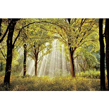 Star Creations ''Dressed to Shine X'' by Lars Van de Goor Photographic Print on Wrapped Canvas