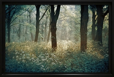 Star Creations ''Forest De Tenom'' by Lars Van de Goor Photographic Print on Wrapped Canvas