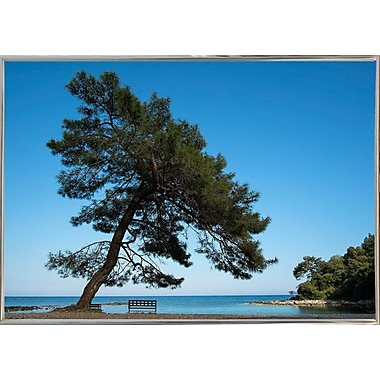 East Urban Home 'Tree at the Sea' Photographic Print; Silver Metal Framed Paper