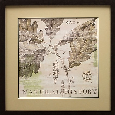 Star Creations Natural History Oak IV by Sue Schlabach Framed Graphic Art