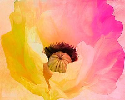 Ebern Designs 'Poppy Gradient II' Print; Rolled Canvas