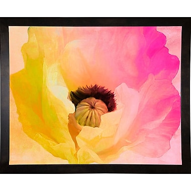 Ebern Designs 'Poppy Gradient II' Print; Cafe Espresso Framed Paper