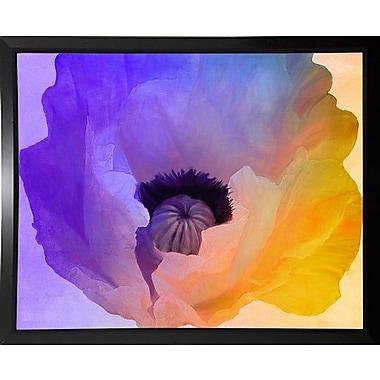 Ebern Designs 'Poppy Gradient III' Print; Budget Saver Framed Paper