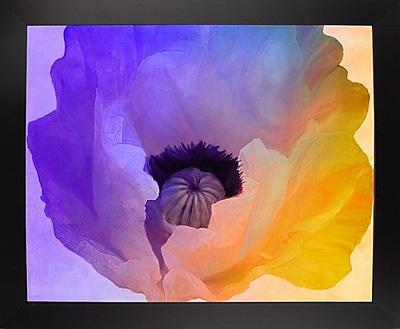 Ebern Designs 'Poppy Gradient III' Print; Affordable Black Large Framed Paper