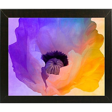 Ebern Designs 'Poppy Gradient III' Print; Affordable Brazilian Walnut Medium Framed Paper