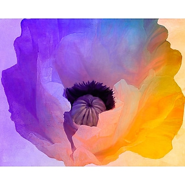 Ebern Designs 'Poppy Gradient III' Print; Rolled Canvas