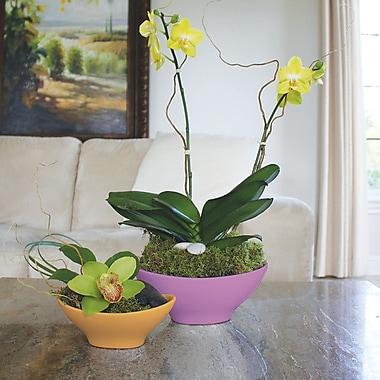 Varick Gallery Reding Oval Bowl; Iris