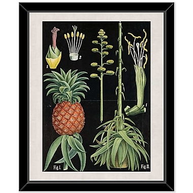 Bay Isle Home 'Plant 3' Framed Graphic Art Print on Canvas